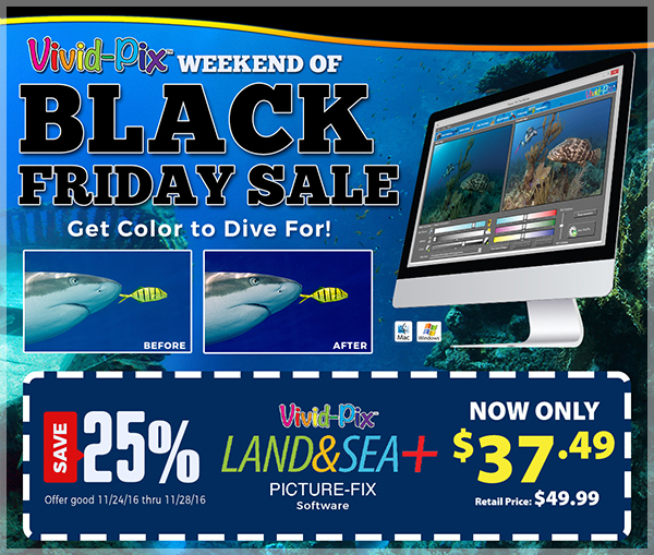 LSPLUS Black Friday Landing